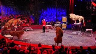 On a testé pour vous : les répétitions du cirque Arlette Gruss!