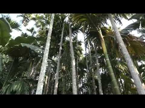Beautiful NE 5. Dumini Chowki Beautiful Assamese Village ...