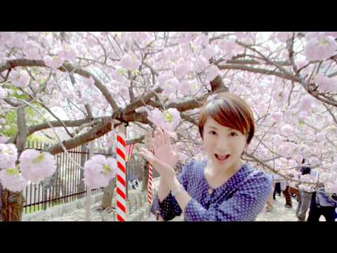 【4K】造幣局 桜の通り抜け テレビ大阪 4K撮影 MINT Cherry blossom viewing in Osaka 4K by Television Osaka - News Real