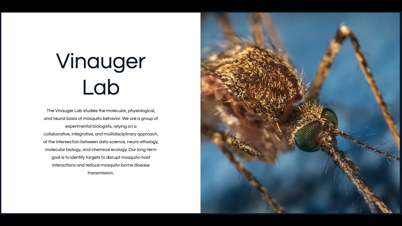 Introduction to the Vinauger Lab