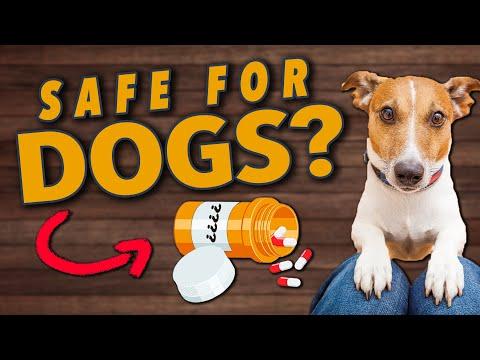 Can I Give My Dog Human Vitamins?