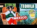 TEQUILA: MAGIC town in MEXICO, DISTILLERY tour!🇲🇽😱