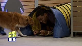 Anthony Anderson Runs a Doggy Agility Course