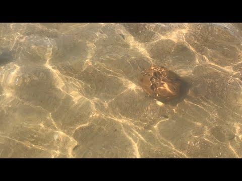 Посёлок Волна, Чёрное море, пляж, море, дельфины, крабы 28 июля 2018