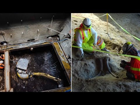 Workers Were Excavating LA's Metro When They Uncovered The Remains Of Two Gigantic Ice Age Beasts