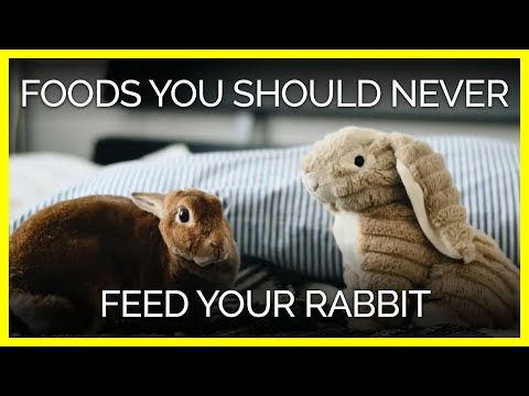 These 15 Foods Could Harm Or Kill Your Rabbit Peta