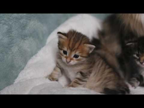 Les premiers chatons de Beethoven, 3 semaines