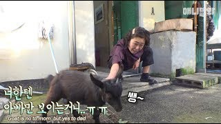 A goat that only likes her dad... Mom would be sad if she was their daughter IRL ㅠㅠ