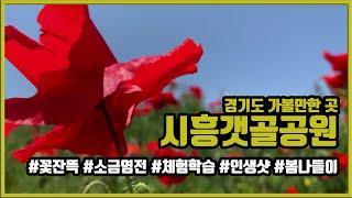 경기도 가볼만한 곳, 시흥갯골공원 봄나들이 인생샷 염전…
