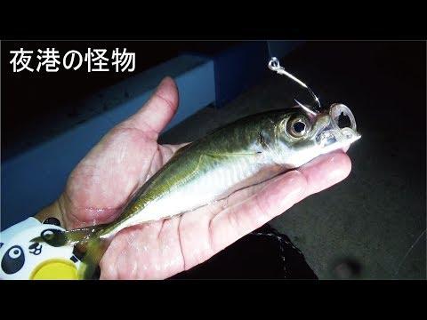 漁港の夜釣りでアジを泳がせたら化け物が喰ってきた