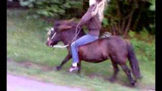 Shetlander linda maakt even sprint in rengalop! thumbnail