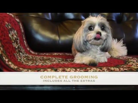 Best Dog Boarding in Burbank, CA | Dog Grooming, Doggy Day Care and lots more