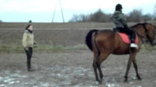 Stadnina koni,Radom,Wośniki