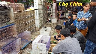 Discover the biggest bird market market in Hanoi City