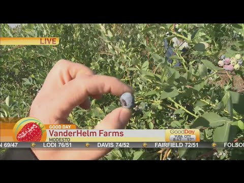 Vanderhelm Farms Youtube