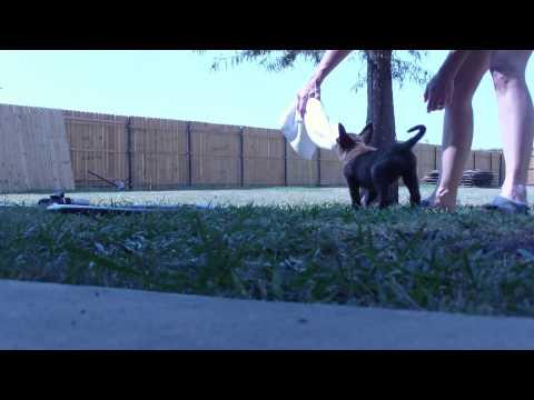 Running bite and rebite thumbnail