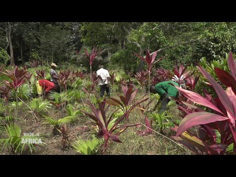 Made In Africa : Le business des fleurs en Côte d'Ivoire