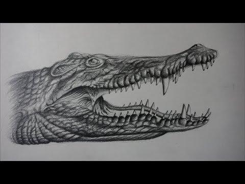 Aterrador Dibujo Realista de un Cocodrilo a lápiz