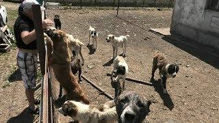 21 век. Собаки на грани смерти. Живодер. Зоозащитники. Бараново. Собаки. Щенки. Староконный рынок.