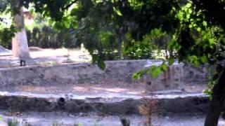 Плотина Бекабад