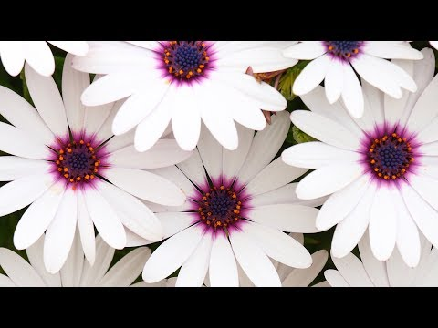 """Peaceful music, Relaxing music, """"Flowers for the Heart"""" by Tim Janis"""
