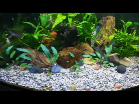 Freshwater RENA Tank with Eheim and JBL external filters