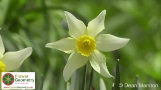 The Beauty of Flowers and Nature - Looking with New Eyes - Flower Geometry International