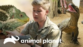 6 reptiles que debes conocer | Los Irwin | Animal Planet
