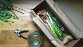 the tale of hyacinth iris