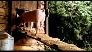 Babe, le cochon devenu berger ( streaming VO )