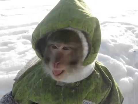 Mono Conoce La Nieve Por Primera Vez Youtube