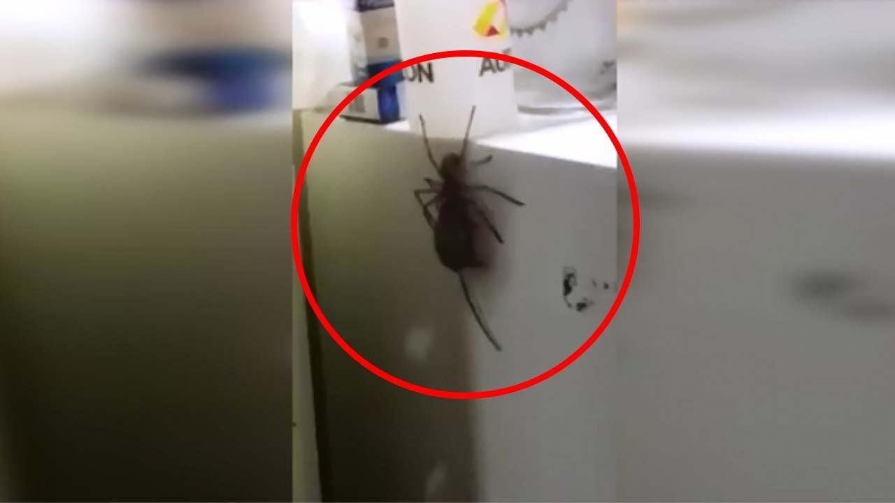 Enorme araña caza ratones - YouTube