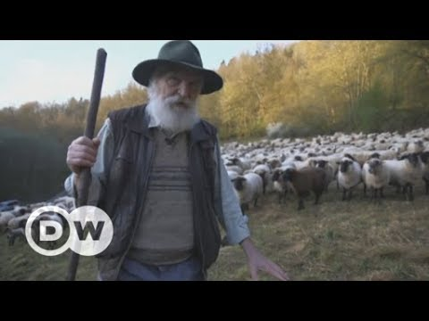 Europe: A new app to show sheep the way with GPS | DW English
