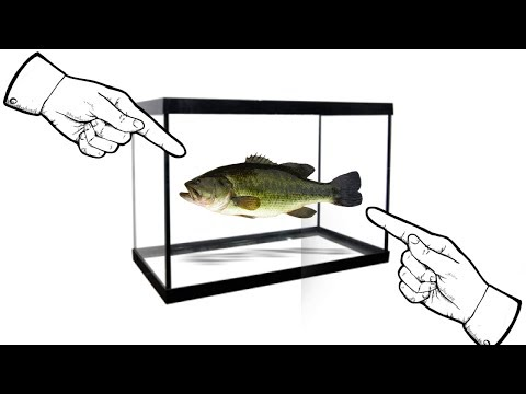 How To Raise A Bass As A Pet In 3 EASY Steps