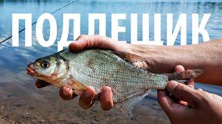 Утренний клёв не даёт покоя Рыбалка на Рузе