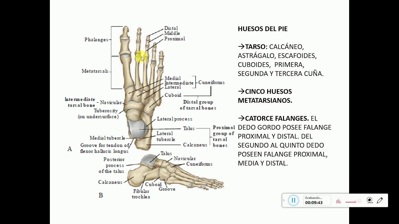 Fantástico Anatomía Dedo Mri Bandera - Anatomía de Las Imágenesdel ...