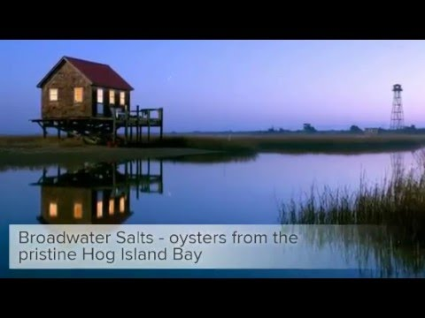Broadwater Salts   Oysters   Special   April 2016