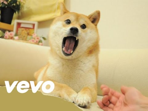 Official Doge Music Video ft. Pajidsui
