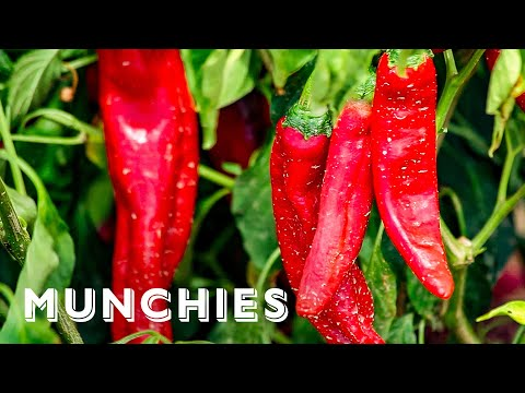 Chile Addiction in New Mexico - Local Obsession