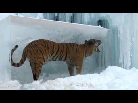 Top 10 Unbelievable Animals Frozen In Time