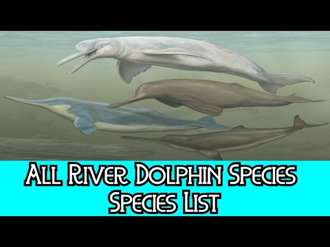 All River Dolphin Species - Species List