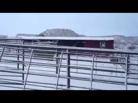 Horse travel update New Mexico