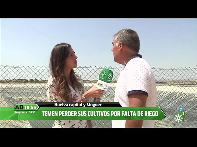 Agricultores del Condado de Huelva se concentran ante la Subdelegación - Andalucía Directo