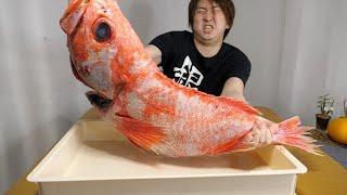 深海500メートルに生息するの幻の巨大魚【メヌケ】が手に入りました!!