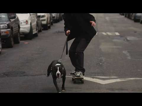 Inside Every Great dog, is a Skate Dog- Adopt a Pitbull- Second Chance Rescue NYC