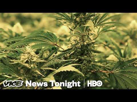 The Black Market For Pot Is Still Thriving In California (HBO) Mp3