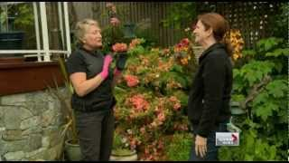 PABC Member Trish Hopkins' gardening tips on Global BC