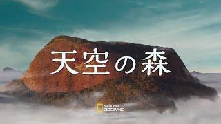 天空の森 - 全編 |#ナショジオフィルムズ
