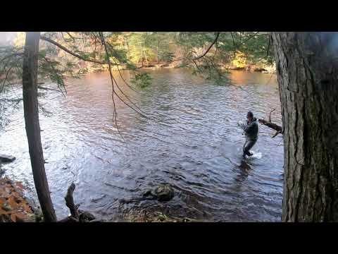Salmon River NY. Steelhead & Brown Trout Fly Fishing 2019