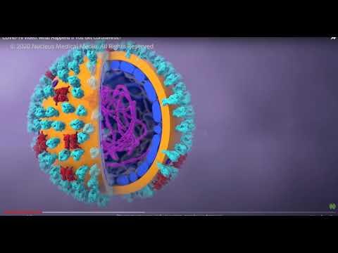 этиология, патогенез, эпидемиология COVID-19